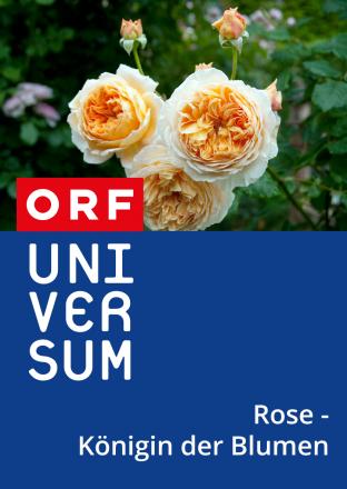 Rose - Königin der Blumen